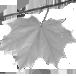 AA. VV. - Clorofilla